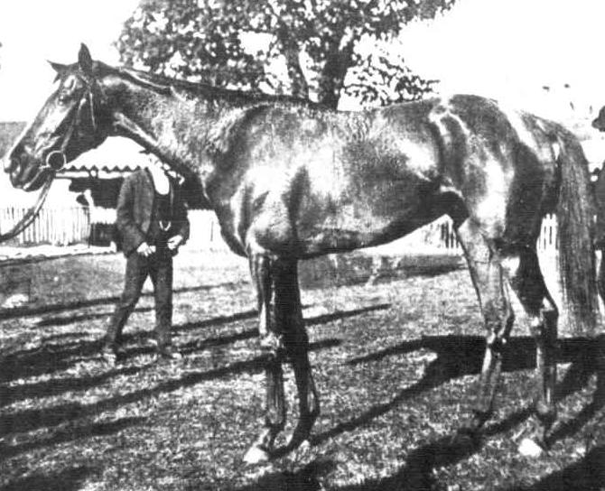 CRUCIFORM DD1903